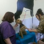 dog grooming course