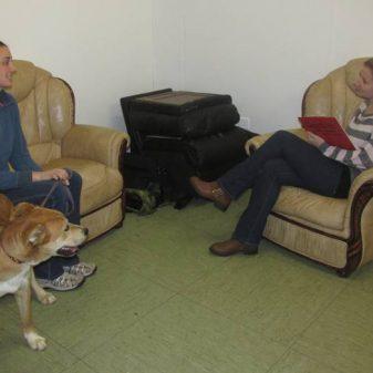 Professional Dog Behaviour Consultant Advanced Certificate