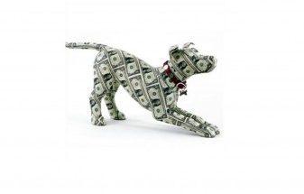 Running a Successful Pet Business in Ireland