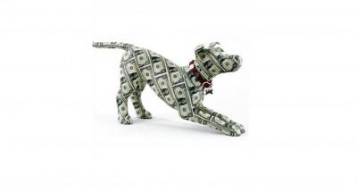 Start a pet business