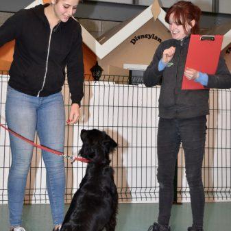 Professional Dog Training Instructor 2.0