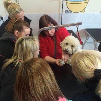 Creedons Dog Grooming Courses