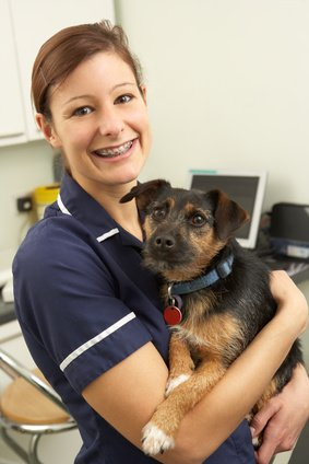 veterinary care assistant course