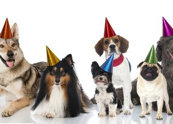 Life Stages of Dogs and Hosting Puppy Socialisation Parties