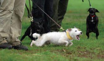Dog Behaviour Science