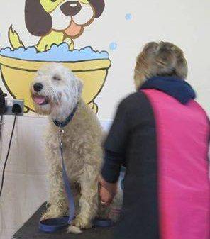 Practical Dog Grooming Course
