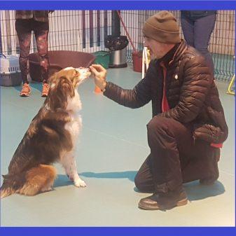 Practical Dog Training Course