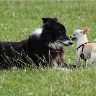 Comprehensive Canine Communication Certificate
