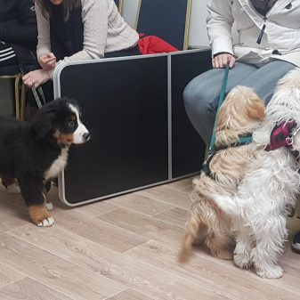 The Dog Behaviourists Guide to Hosting Puppy Parties